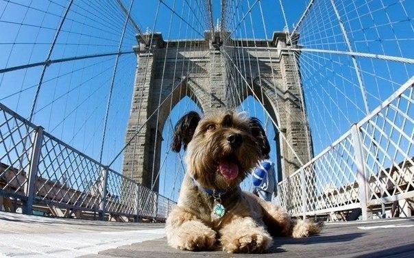Оскар на мосту