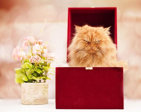 Гарфи в коробке