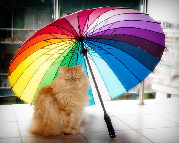 Garfi и веселый зонт