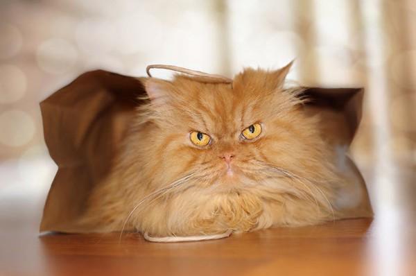 Garfi это не вам не веселый китайский кот