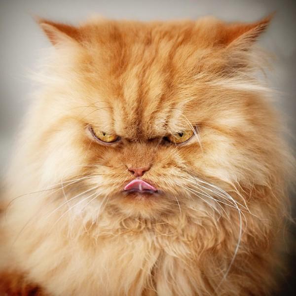 Суровый кошачий взгляд
