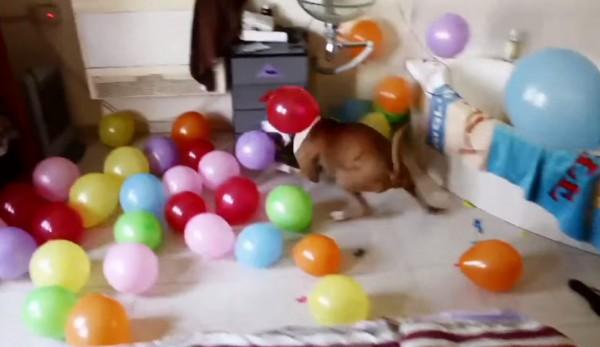 Bunks Birthday dog