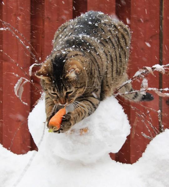 Вегетарианский кот