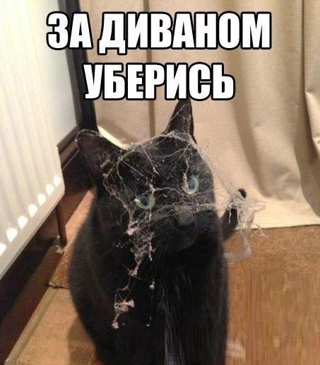 коты помогают убирать в квартире