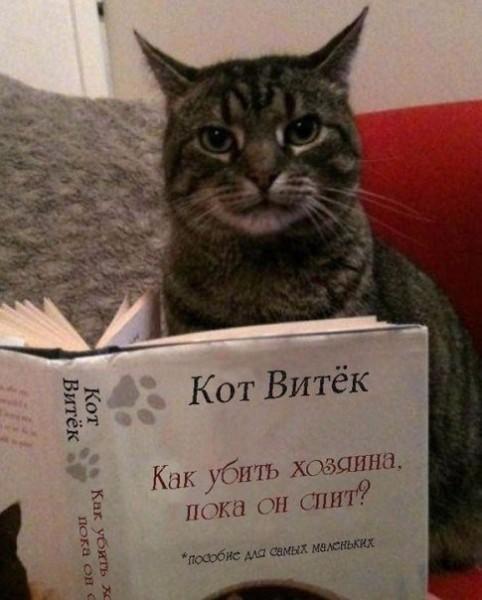 кот Василий читает книгу