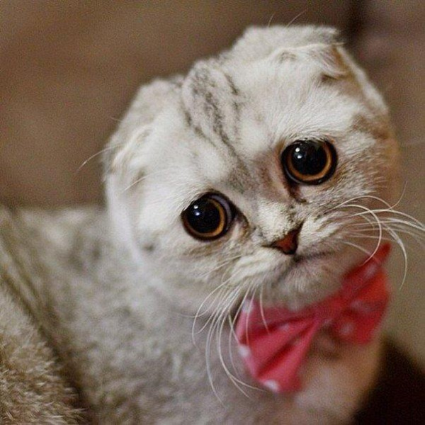 грусный котэ