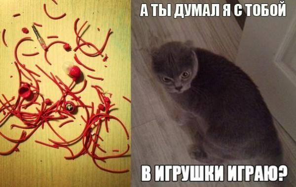 котэ 666 дьявольский кот