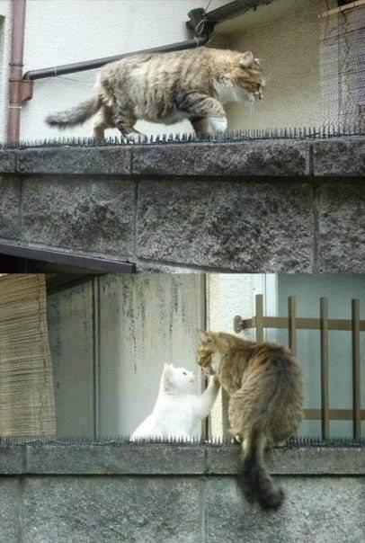 похоже это любовь