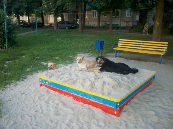 собаки в песочнице, утром