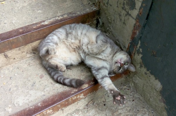 кот Барсик на ступеньках