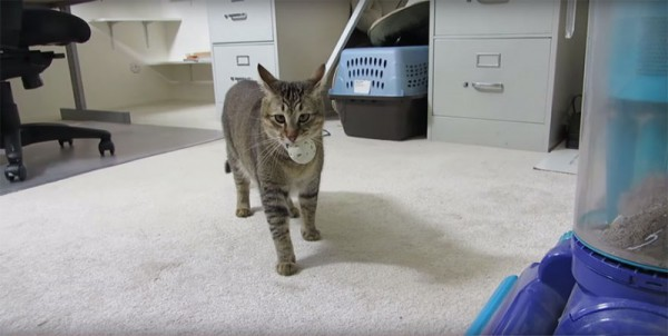 cat mashine 01