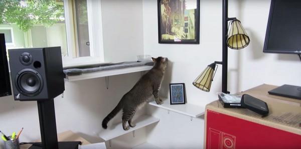 cat mashine, умная машина для кормления кота