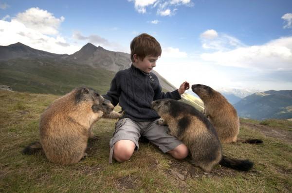 альпийские сурки и мальчик