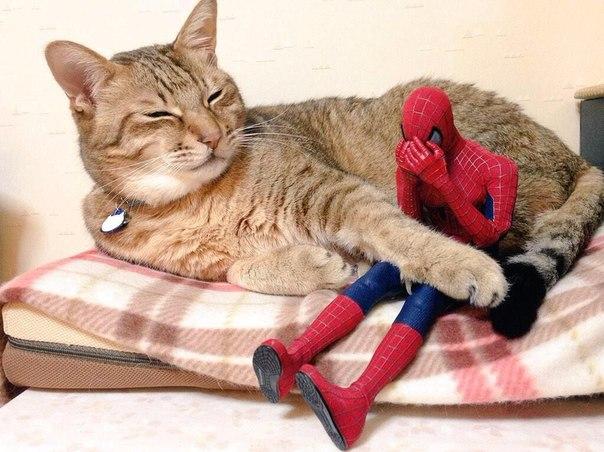 cat and spiderman, кот утешает Спайдермэна