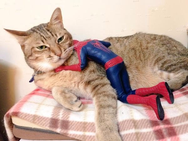 cat and spiderman, кот и Spiderman
