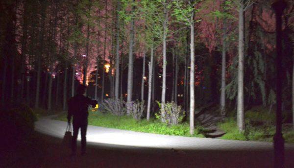 прожектор в лесу ночью