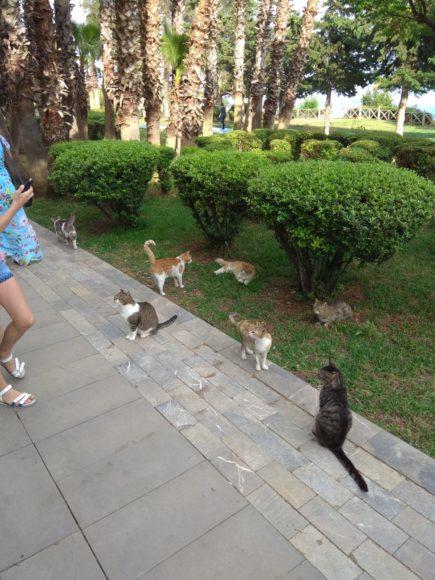 много котов в парке Анталии