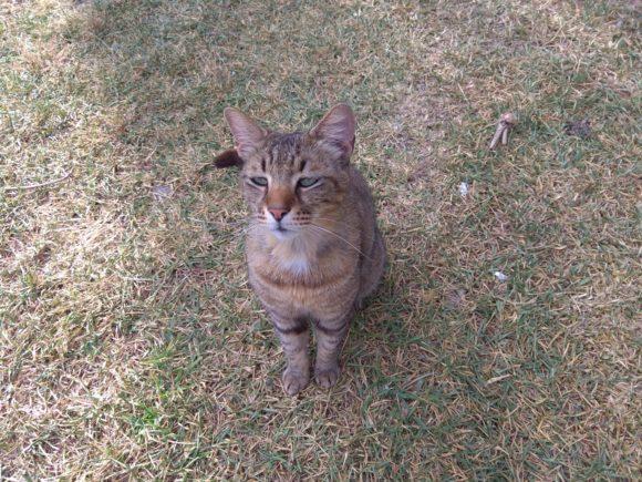 Анталия, грустный кот