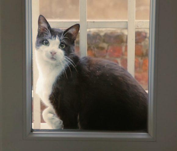 Gamsiz cat, Гамсиз беззаботный кот
