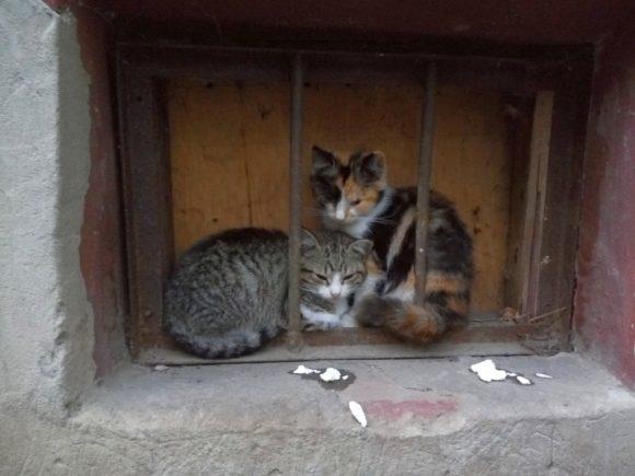 small cat, котята