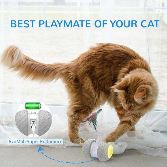 лучшая игрушка для вашего кота