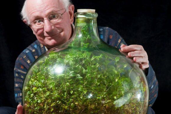 David Latimer, Дэвид Латимер и растение в бутыле