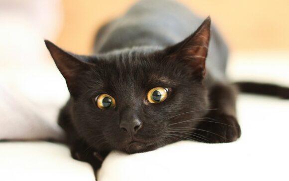 black cat, Черныш милый кот