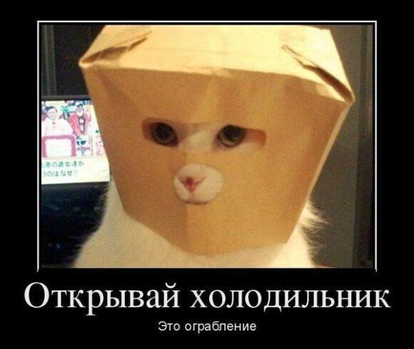 ограбление холодильника котом фото