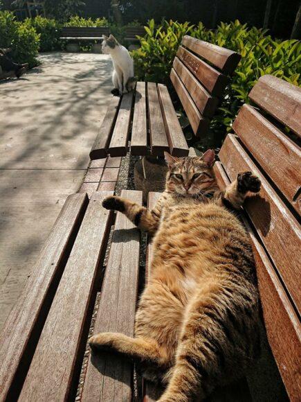 фотогеничность этого кота зашкаливает