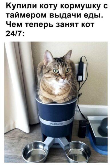 кот с автокормушкой по расписанию