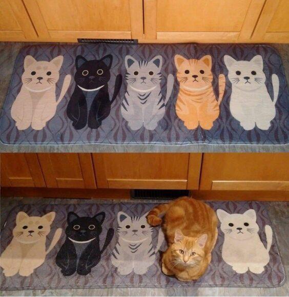 найдите 5 отличий с котом
