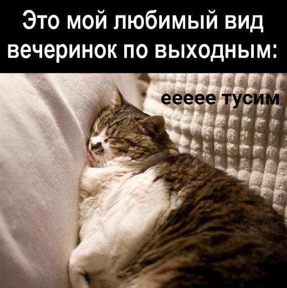 веселая туса сонного кота
