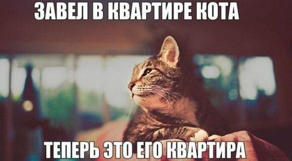 теперь это квартира кота