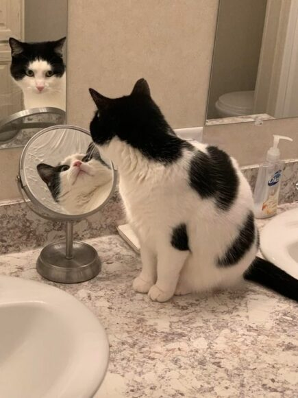 кот и зеркало