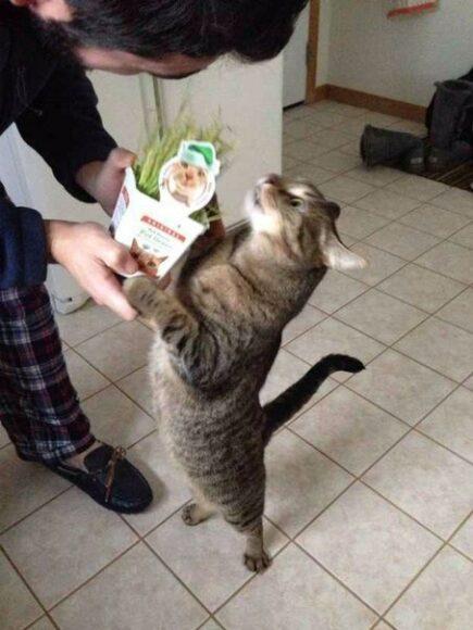 кот - любитель травы