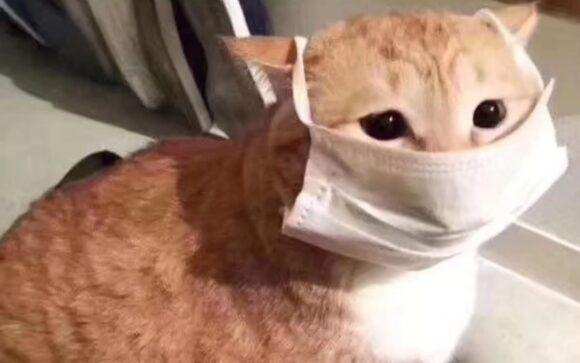 коты в маске от коронавируса!